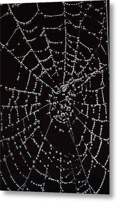 Web Of Pearls Metal Print by Rebecca Fitzgerald