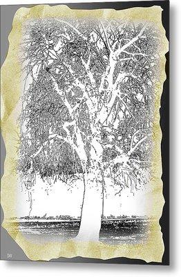 Weeping Willow Designer Metal Print by Debra     Vatalaro