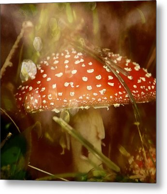 Welcome To Wonderland Metal Print by Odd Jeppesen