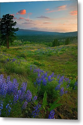 Wenas Valley Sunset Metal Print by Mike  Dawson