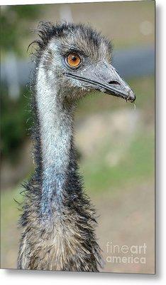 Emu 2 Metal Print