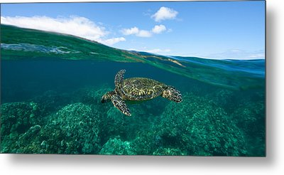 West Maui Green Sea Turtle Metal Print