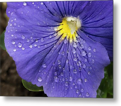 Metal Print featuring the photograph Wet Pansy by Jean Noren