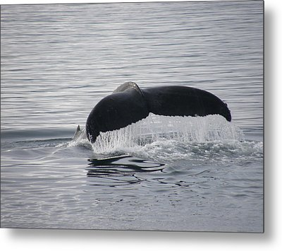 Whale Tail Waterfall Photo Metal Print by Judy Mercer