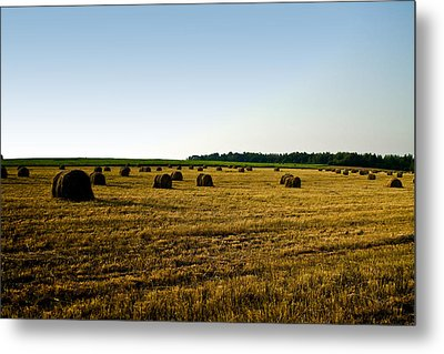 Metal Print featuring the photograph Wheat Field by Gary Smith
