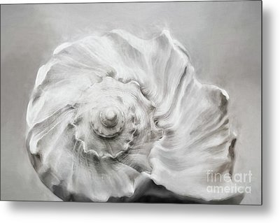 Metal Print featuring the photograph Whelk In Black And White by Benanne Stiens