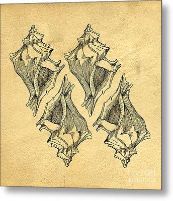Whelk Seashells Vintage Metal Print