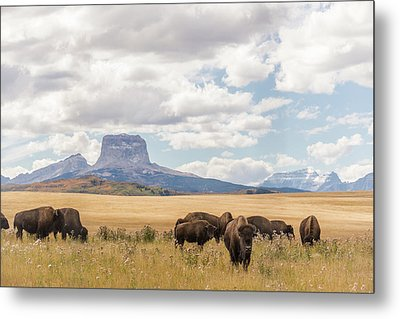 Where The Buffalo Roam Metal Print