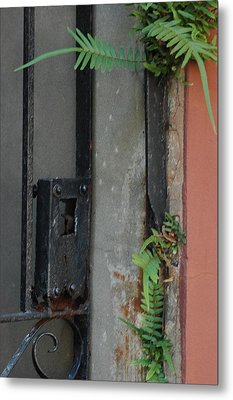 Metal Print featuring the photograph Where The Fern Grows by Lori Mellen-Pagliaro