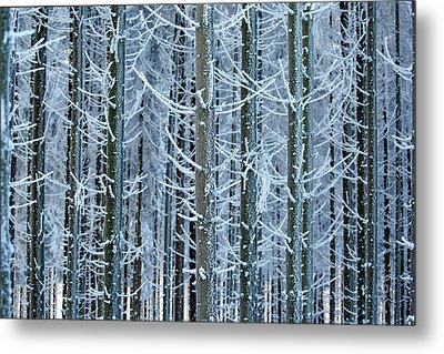 Whimsical Winters Metal Print by Roeselien Raimond