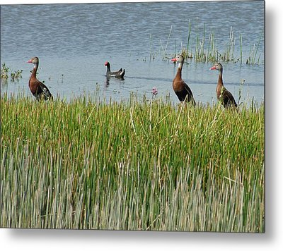 Metal Print featuring the photograph Whistling Moor by Lynda Dawson-Youngclaus