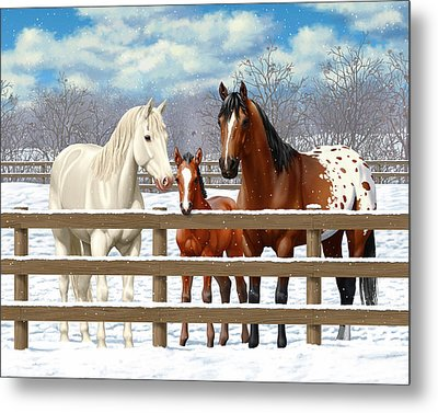 White Bay Appaloosa Horses In Snow Metal Print