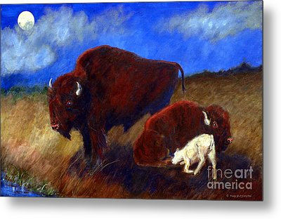 White Buffalo Calf Metal Print