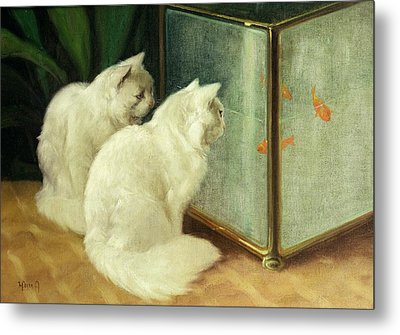 White Cats Watching Goldfish Metal Print by Arthur Heyer