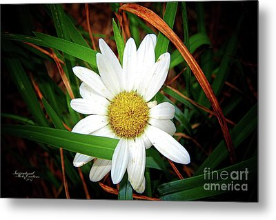 White Daisy Metal Print by Inspirational Photo Creations Audrey Woods
