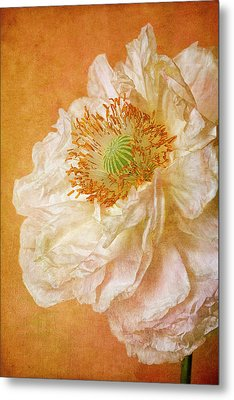 White Double Poppy Metal Print by © Leslie Nicole Photographic Art