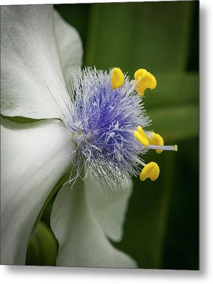 Metal Print featuring the photograph White Flower by Jean Noren
