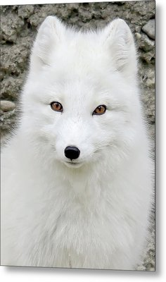 White Fox Metal Print