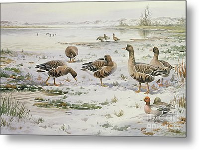 White Fronted Geese Metal Print