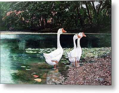 White Geese In Early Fall '07 Metal Print