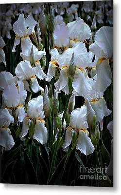 White Iris Garden Metal Print by Sherry Hallemeier