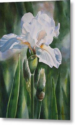White Iris With Bud Metal Print by Sharon Freeman