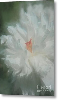 Metal Print featuring the photograph White Peony by Benanne Stiens