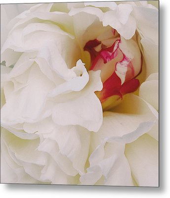 White Petals Metal Print by Michael Peychich