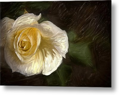 White Rose Metal Print by Graham Hughes