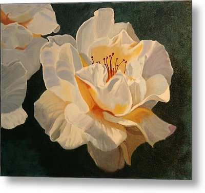 White Rose Metal Print by Robert Tower