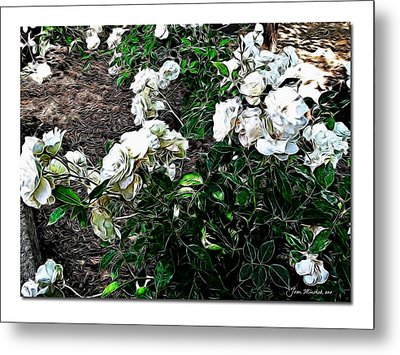 Metal Print featuring the photograph White Roses by Joan  Minchak