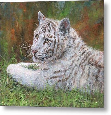 White Tiger Cub 2 Metal Print by David Stribbling