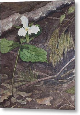 White Trillium  Metal Print by Debbie Homewood