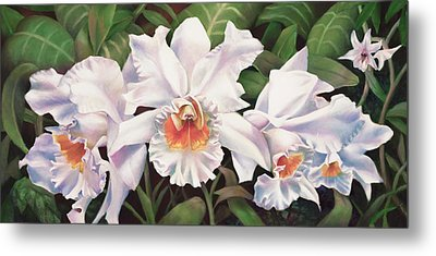 White Wedding Orchid Metal Print by Nancy Tilles