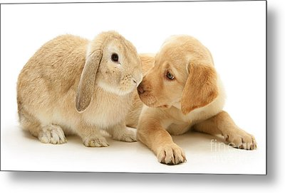 Who Ate All The Carrots Metal Print