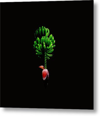 Wild Banana Bunch With Flower Color Metal Print by Kathy Daxon