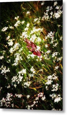 Wild Flowers Metal Print by Stelios Kleanthous