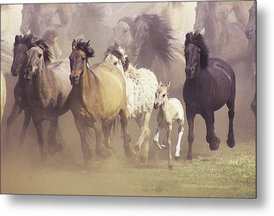 Wild Horses Running Metal Print by John Foxx