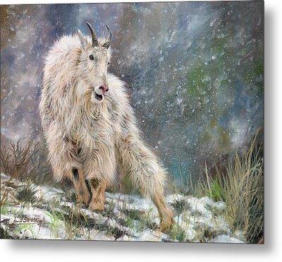 Wild Mountain Goat Metal Print