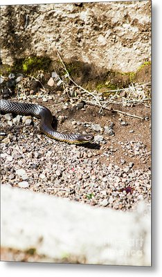 Wild Tiger Snake Metal Print by Jorgo Photography - Wall Art Gallery
