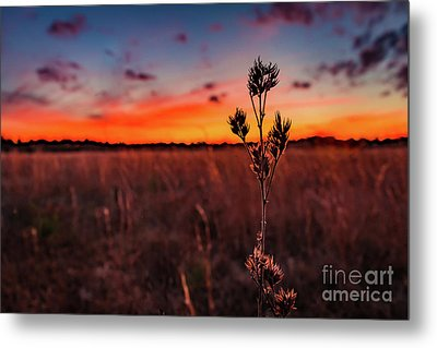Wildfire Metal Print by Rivers Rudloff
