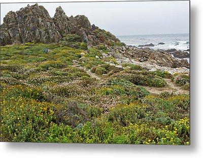 Wildflowers At China Rock - Pebble Beach - California Metal Print by Brendan Reals