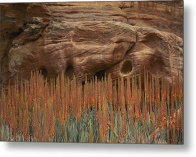 Wildflowers In The Desert Land Of Petra Metal Print by Annie Griffiths
