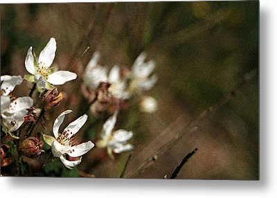 Wildflowers Metal Print by Marna Edwards Flavell