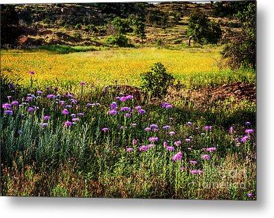 Wildflowers Of The Wichita Mountains Metal Print by Tamyra Ayles