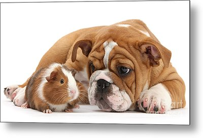 Will You Be My Friend? Metal Print