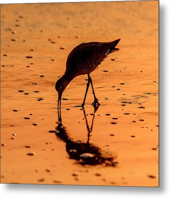 Metal Print featuring the photograph Willet On Sunrise Surf by Steven Sparks