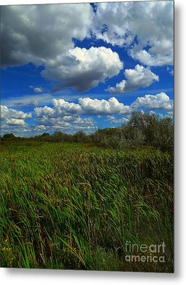 Wind In The Cattails Metal Print by Annie Gibbons