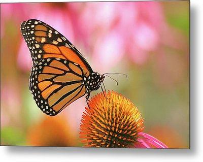 Metal Print featuring the photograph Winged Beauty by Doris Potter