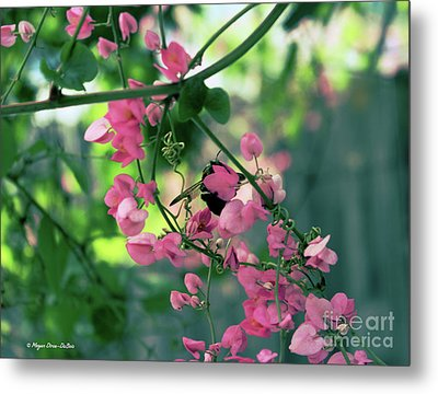 Metal Print featuring the photograph Wings by Megan Dirsa-DuBois